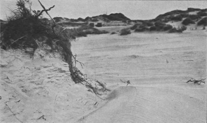 Massart (1913, foto 27)
