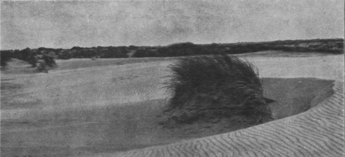 Massart (1913, foto 28)