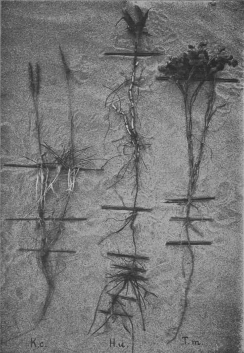 Massart (1913, foto 29)