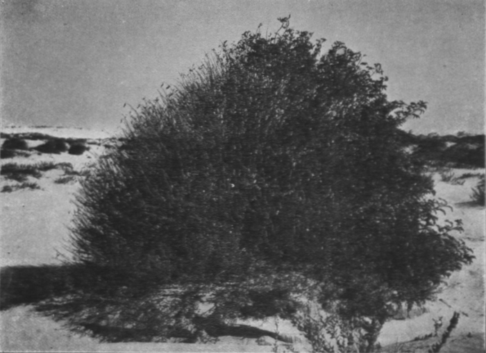 Massart (1913, foto 32)