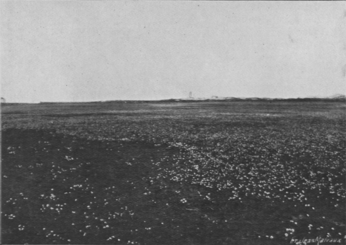 Massart (1913, foto 14)