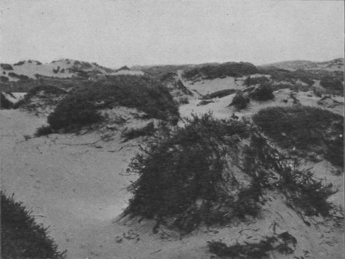 Massart (1913, foto 62)