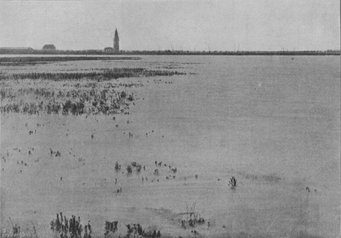 Massart (1913, foto 73)