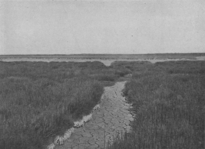 Massart (1913, foto 74)