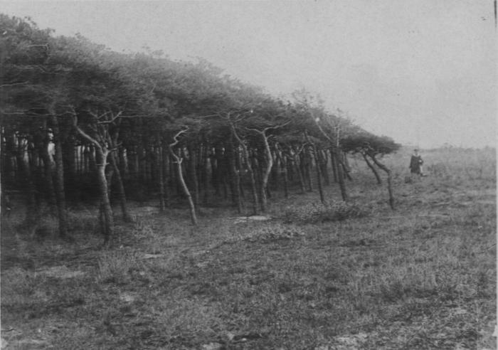 Wery (1908, foto 42)