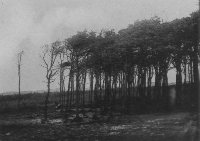 Wery (1908, foto 43)