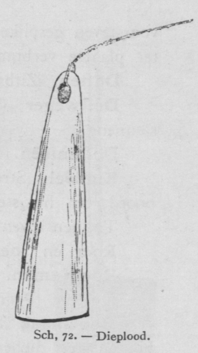 Bly (1902, fig. 72)