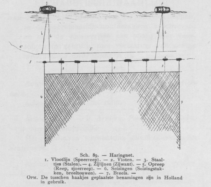 Bly (1902, fig. 89)