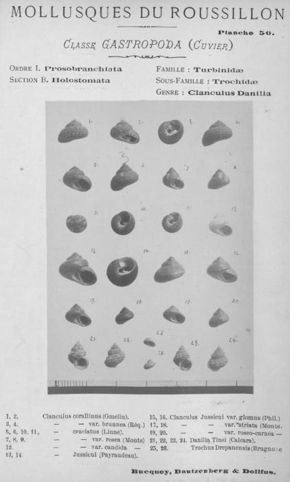 Bucquoy et al. (1882-1886, pl. 50)