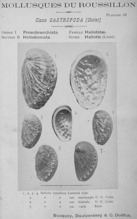 Bucquoy et al. (1882-1886, pl. 52)