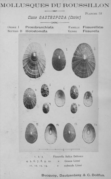 Bucquoy et al. (1882-1886, pl. 53)