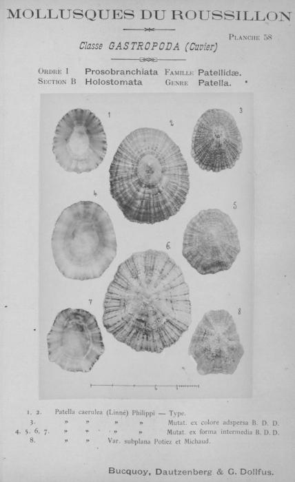 Bucquoy et al. (1882-1886, pl. 58)