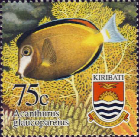 Acanthurus glaucopareius