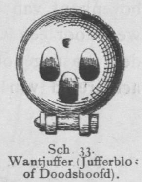 Bly (1902, fig. 33)
