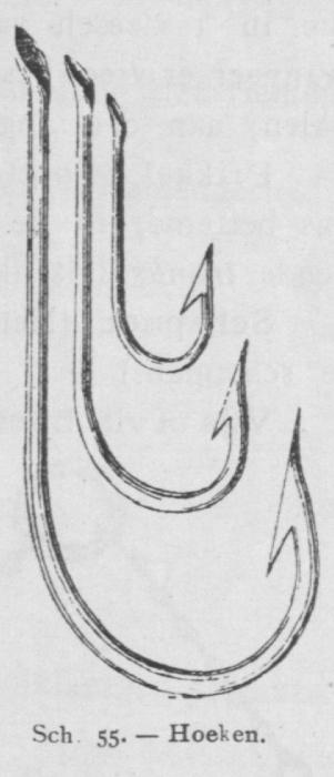 Bly (1902, fig. 55)