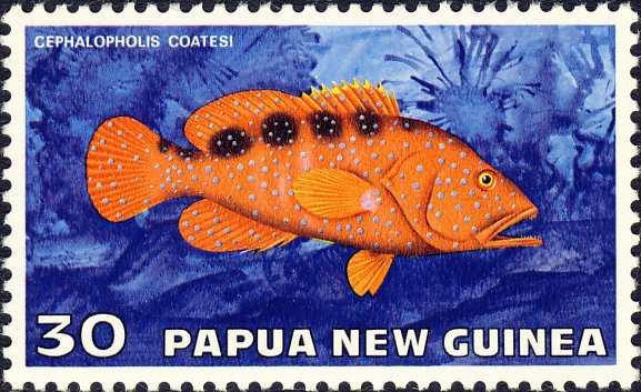 Cephalopholis coatesi