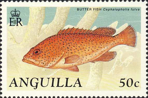 Cephalopholis fulva