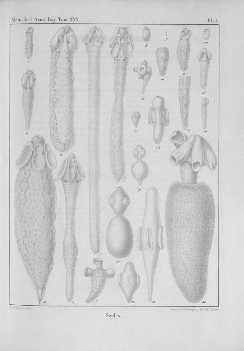 Van Beneden (1850, pl. 01)