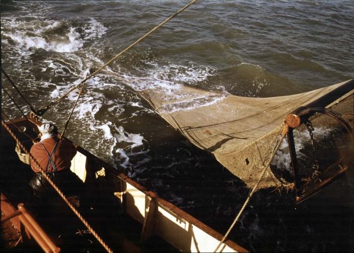 Garnaalvissen