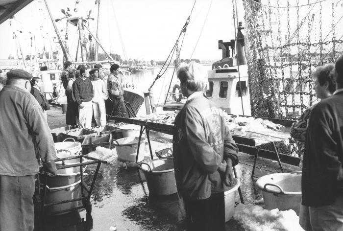Sorteren aangelande vis