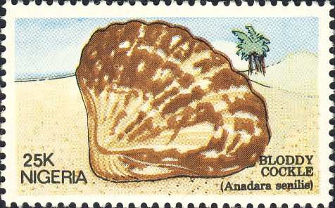 Anadara senilis