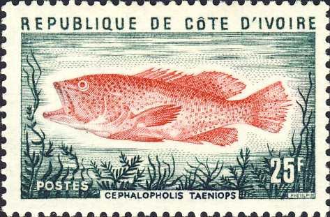 Cephalopholis taeniops