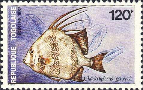 Chaetodipterus goreensis