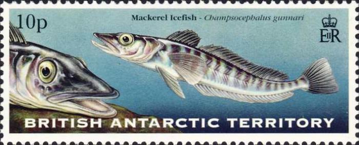 Champsocephalus gunnari