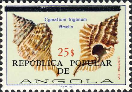 Cymatium trigonum