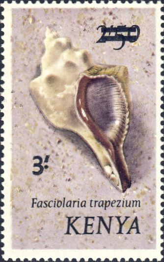 Fasciolaria trapezium