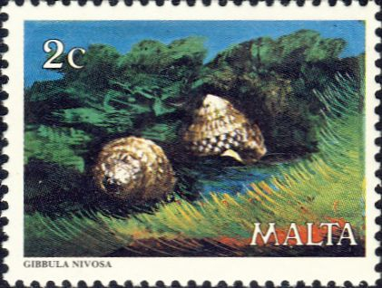 Gibbula nivosa