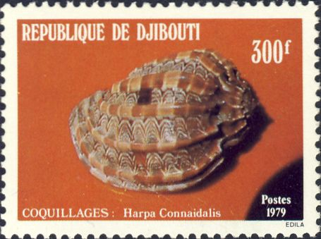 Harpa conoidalis