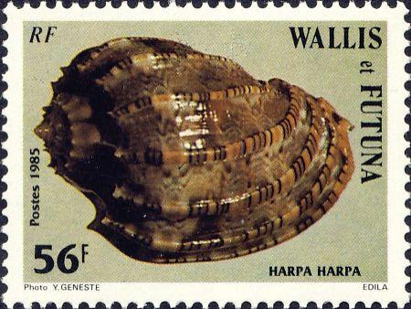Harpa harpa