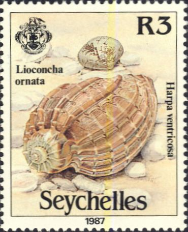 Harpa ventricosa