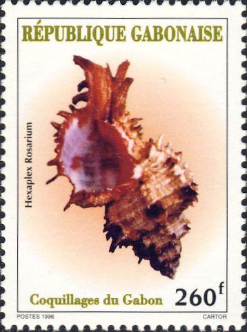 Hexaplex rosarium