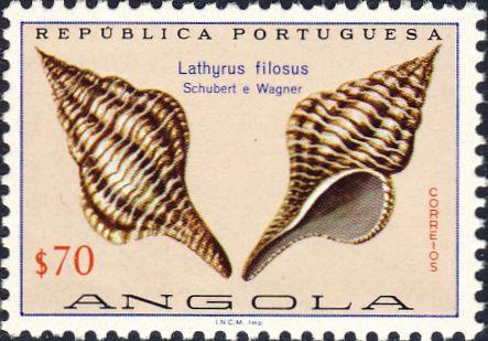 Latirus filosus