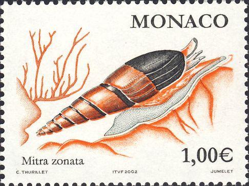 Mitra zonata