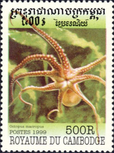 Octopus macropus