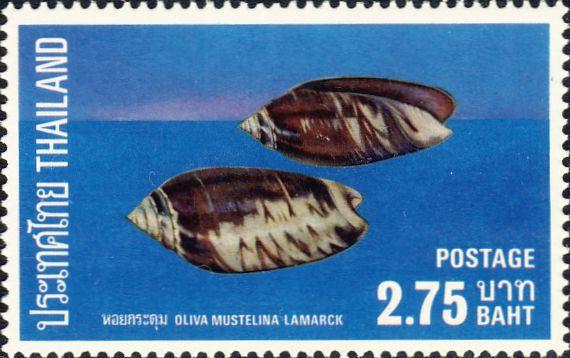 Oliva mustellina
