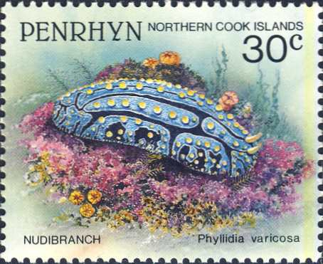 Phyllidia varicosa