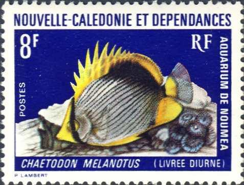 Chaetodon melanotus