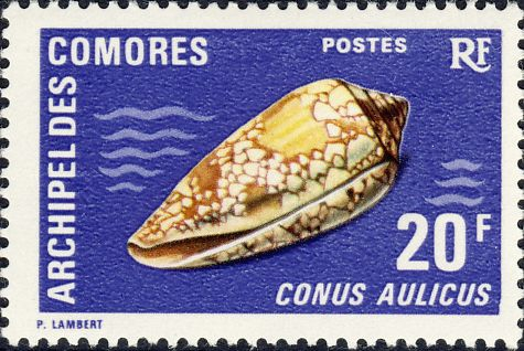 Conus aulicus