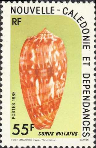 Conus bullatus