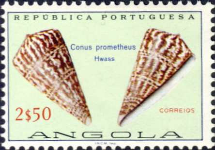 Conus prometheus