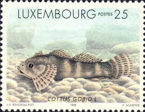 Cottus gobio