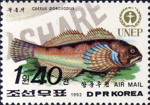 Cottus poecilopus