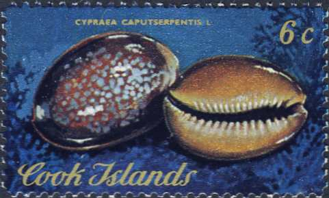 Cypraea caputserpentis