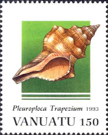 Pleuroploca trapezium