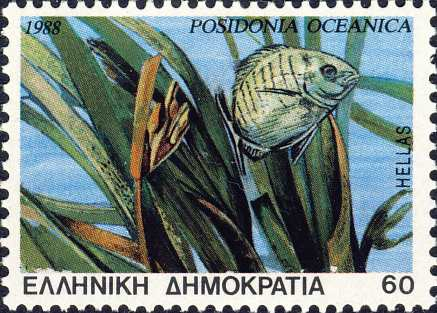 Posidonia oceanica
