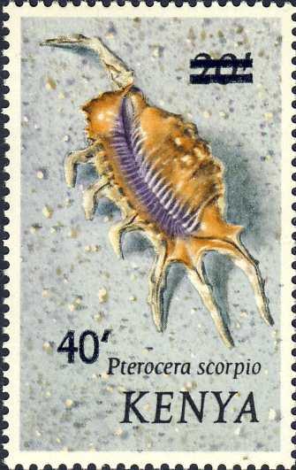 Pterocera scorpius
